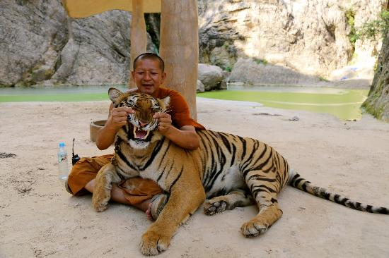 TIGER TEMPLE: Take a Tiger Selfie!